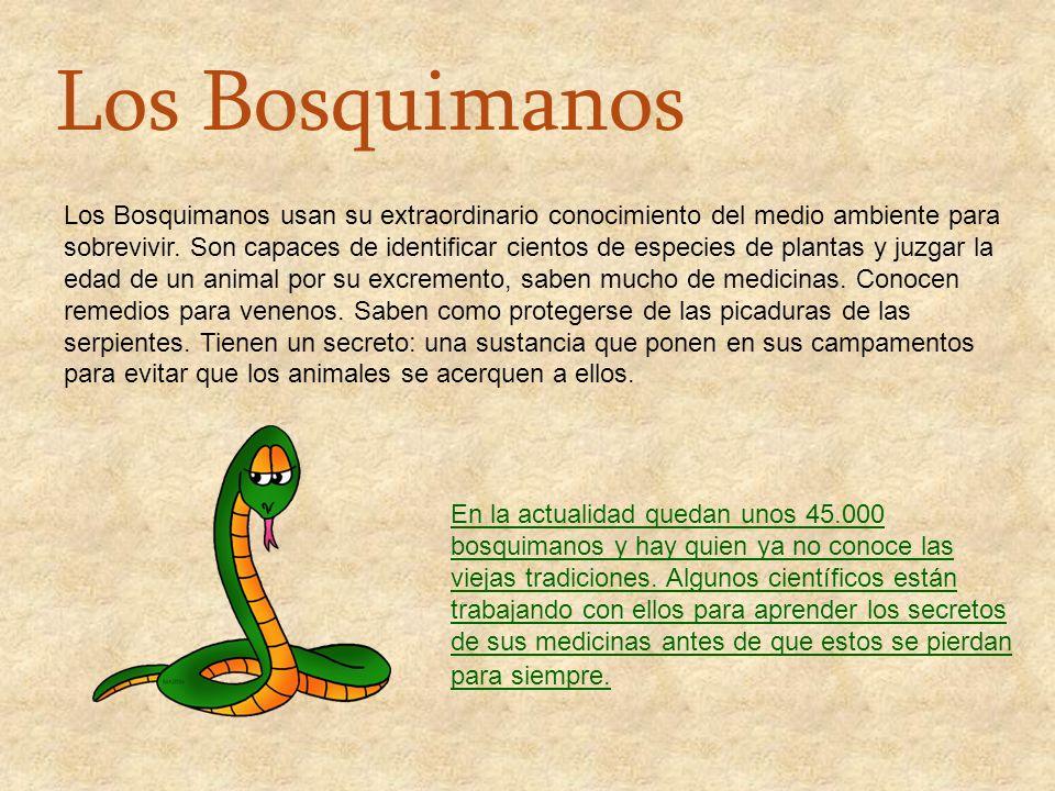 Los Bosquimanos usan su extraordinario conocimiento del medio ambiente para sobrevivir. Son capaces de identificar cientos de especies de plantas y ju