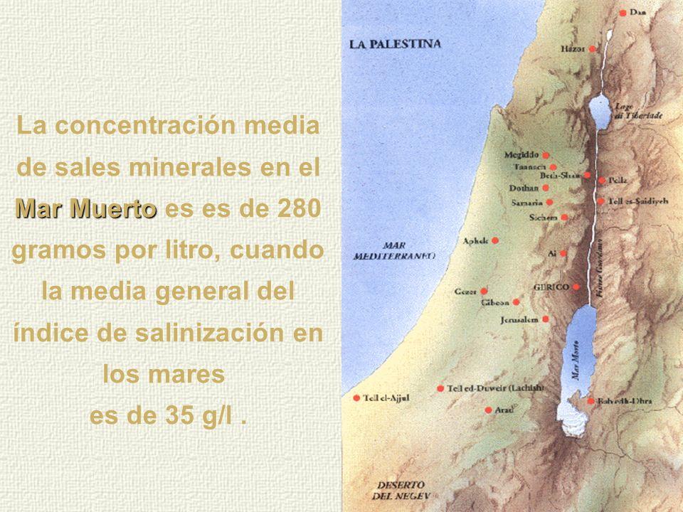Mar Muerto Las aguas del Mar Muerto tienen un porcentaje de sal que no tiene comparación con ninguna concentración de agua salada existente en otra pa