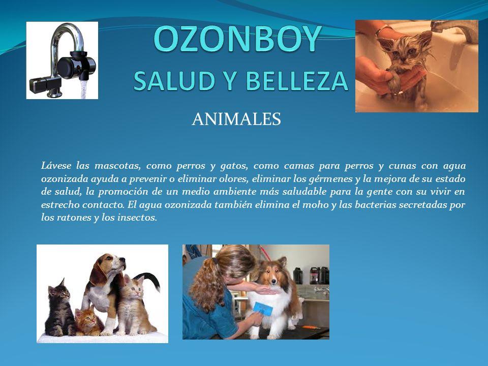 ANIMALES Lávese las mascotas, como perros y gatos, como camas para perros y cunas con agua ozonizada ayuda a prevenir o eliminar olores, eliminar los