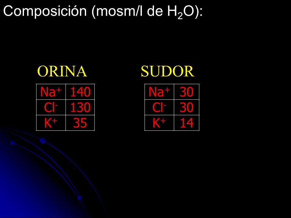 Composición (mosm/l de H 2 O): Na + 140Na + 30 Cl - 130Cl - 30 K+K+ 35K+K+ 14 ORINA SUDOR