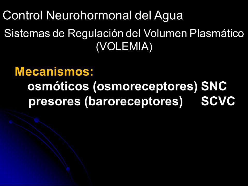 Control Neurohormonal del Agua Sistemas de Regulación del Volumen Plasmático (VOLEMIA) Mecanismos: osmóticos (osmoreceptores)SNC presores (barorecepto