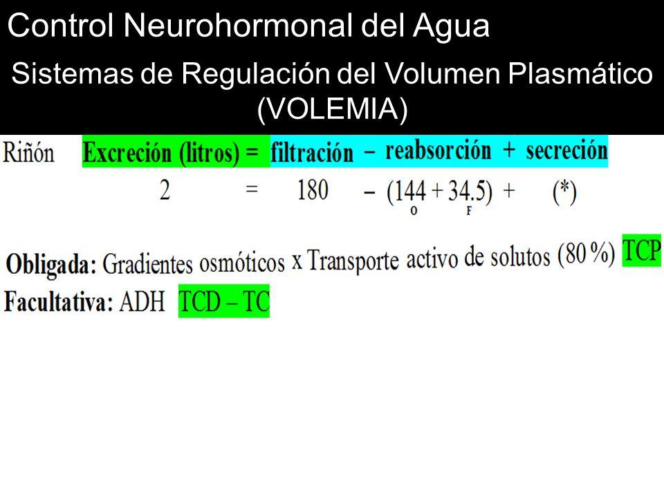 Control Neurohormonal del Agua Sistemas de Regulación del Volumen Plasmático (VOLEMIA)