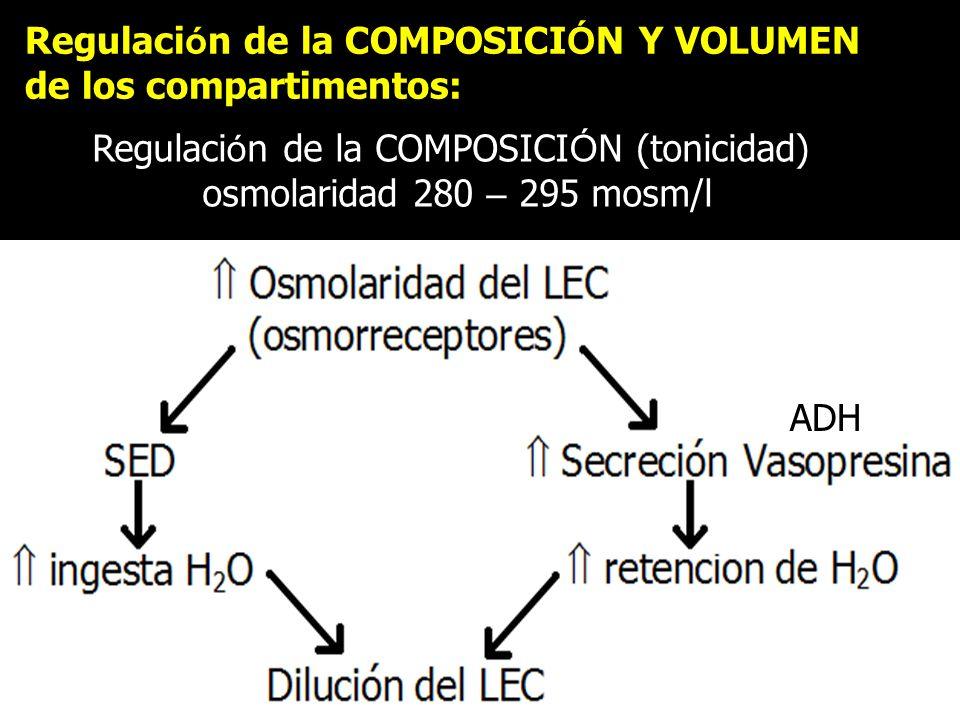 Regulaci ó n de la COMPOSICI Ó N Y VOLUMEN de los compartimentos: Regulaci ó n de la COMPOSICI Ó N (tonicidad) osmolaridad 280 – 295 mosm/l ADH