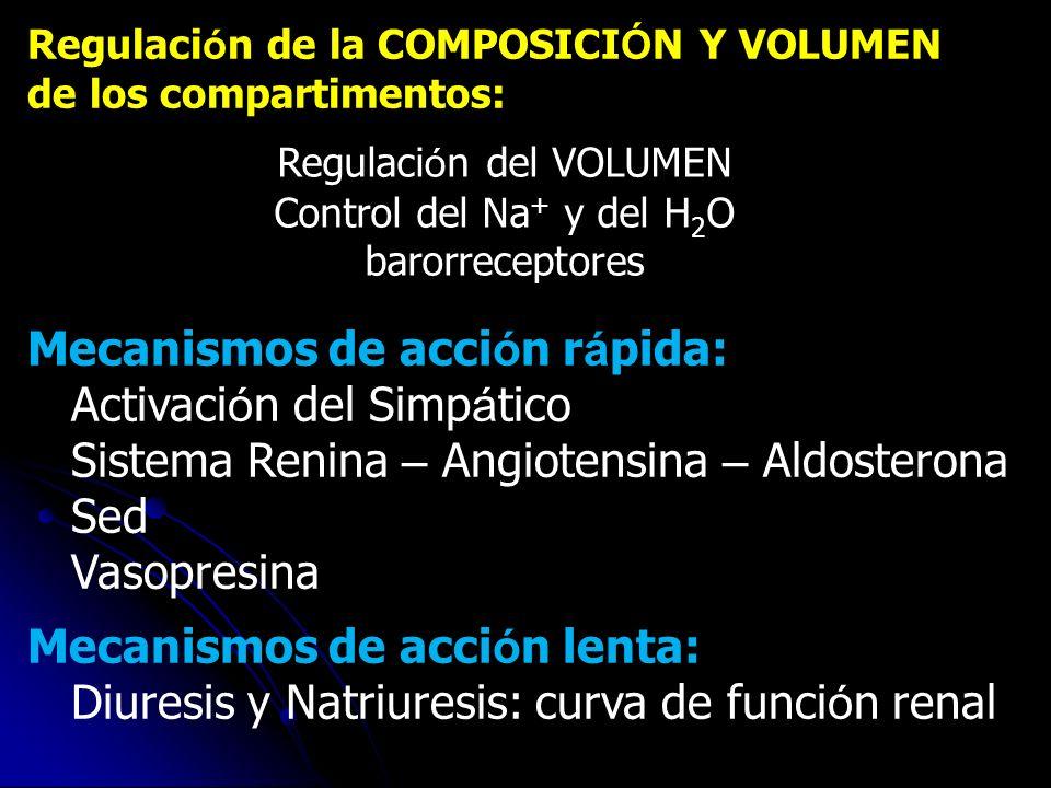 Regulaci ó n de la COMPOSICI Ó N Y VOLUMEN de los compartimentos: Regulaci ó n del VOLUMEN Control del Na + y del H 2 O barorreceptores Mecanismos de