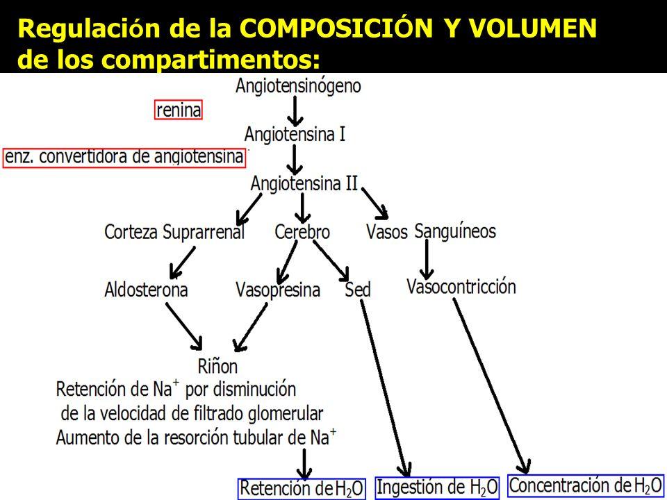 Regulaci ó n de la COMPOSICI Ó N Y VOLUMEN de los compartimentos: