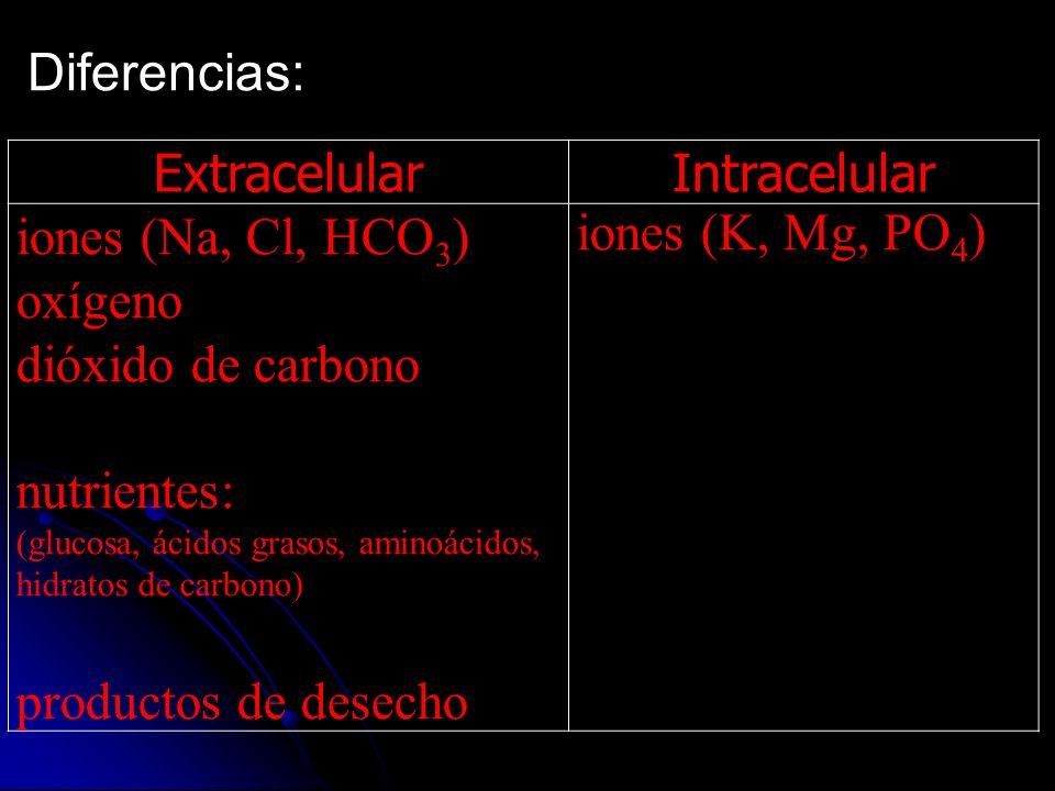 Diferencias: ExtracelularIntracelular iones (Na, Cl, HCO 3 ) oxígeno dióxido de carbono nutrientes: (glucosa, ácidos grasos, aminoácidos, hidratos de