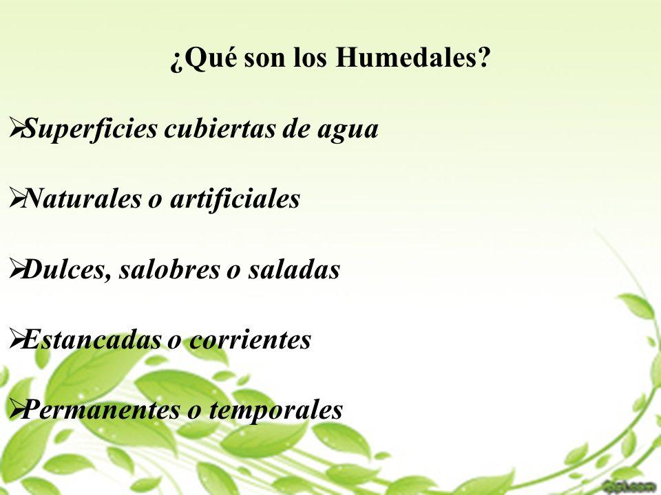 ¿Qué son los Humedales? Superficies cubiertas de agua Naturales o artificiales Dulces, salobres o saladas Estancadas o corrientes Permanentes o tempor