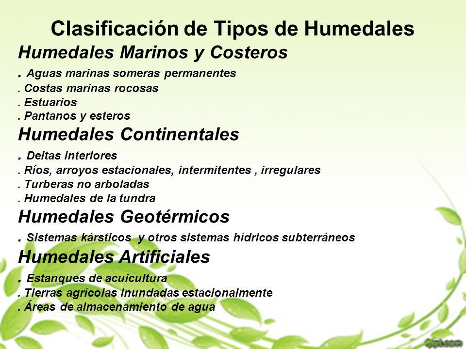 CLASIFICACION DE TIPOS DE HUMEDALES Clasificación de Tipos de Humedales Humedales Marinos y Costeros. Aguas marinas someras permanentes. Costas marina