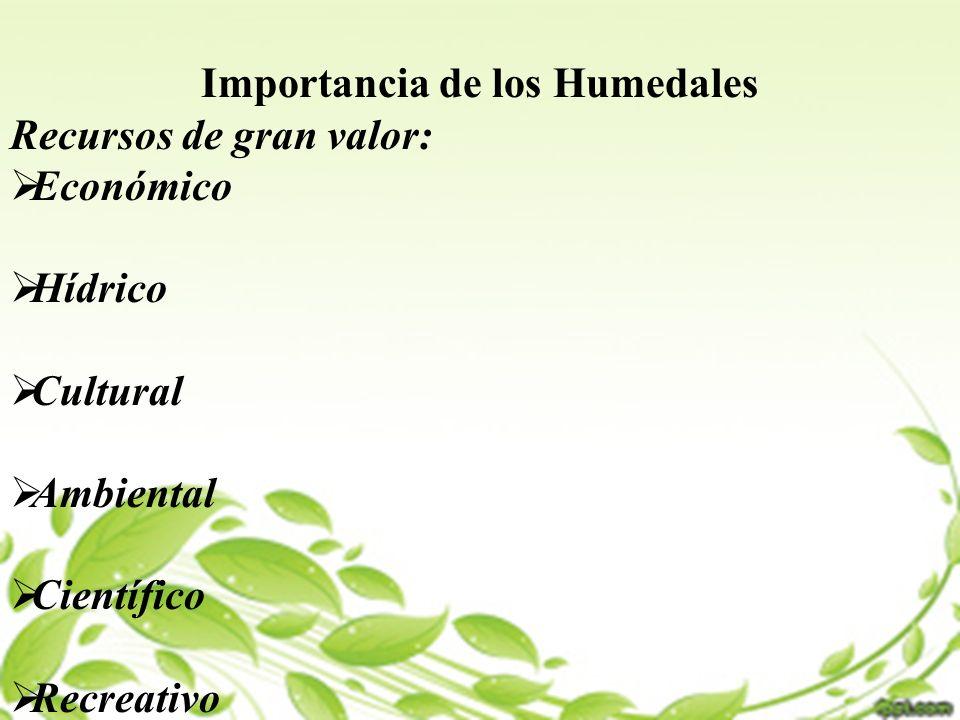 Importancia de los Humedales Recursos de gran valor: Económico Hídrico Cultural Ambiental Científico Recreativo
