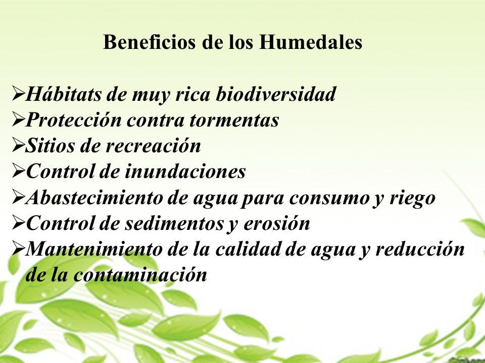 Beneficios de los Humedales Hábitats de muy rica biodiversidad Protección contra tormentas Sitios de recreación Control de inundaciones Abastecimiento de agua para consumo y riego Control de sedimentos y erosión Mantenimiento de la calidad de agua y reducción de la contaminación