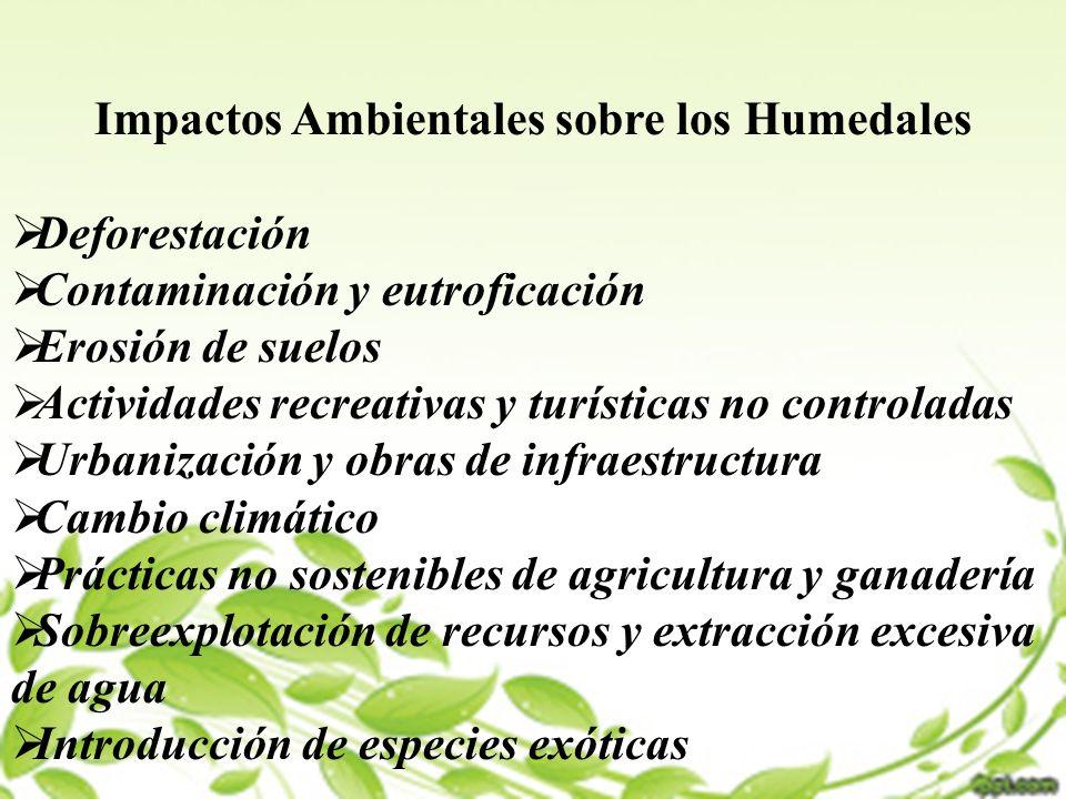 Impactos Ambientales sobre los Humedales Deforestación Contaminación y eutroficación Erosión de suelos Actividades recreativas y turísticas no control