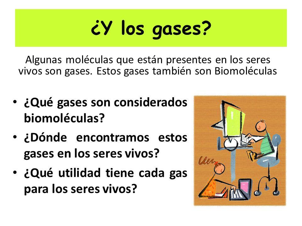 ¿Y los gases.¿Qué gases son considerados biomoléculas.