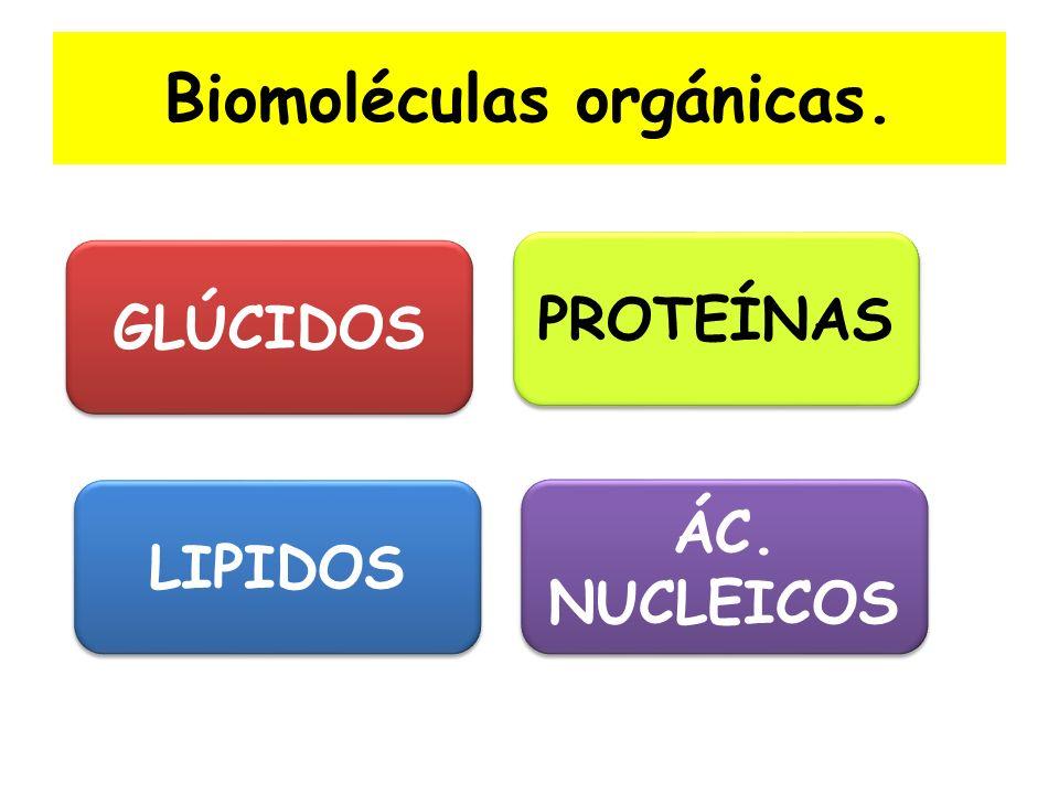 Biomoléculas orgánicas. GLÚCIDOS LIPIDOS PROTEÍNAS ÁC. NUCLEICOS