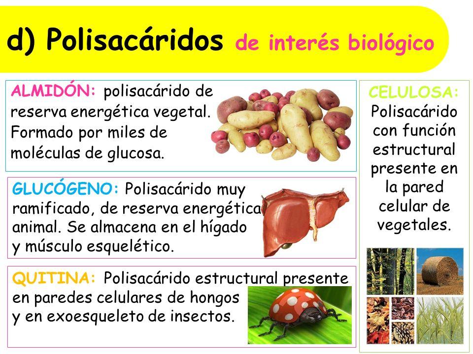 d) Polisacáridos de interés biológico ALMIDÓN: polisacárido de reserva energética vegetal.