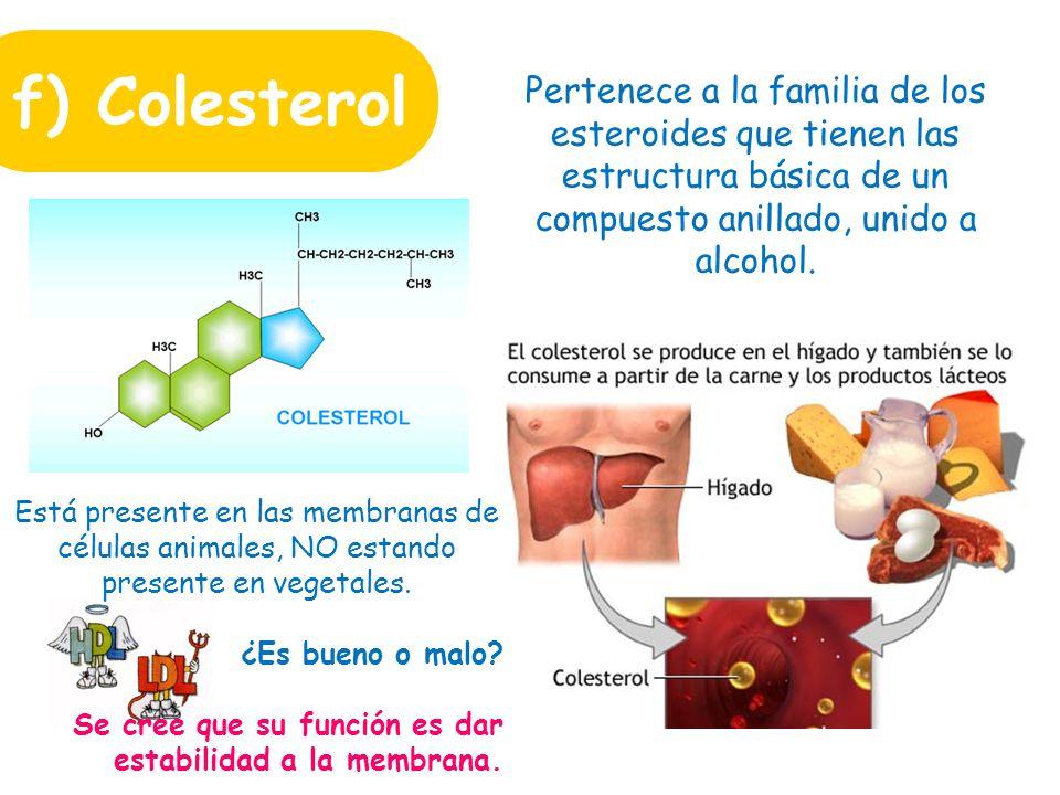 f) Colesterol Pertenece a la familia de los esteroides que tienen las estructura básica de un compuesto anillado, unido a alcohol.
