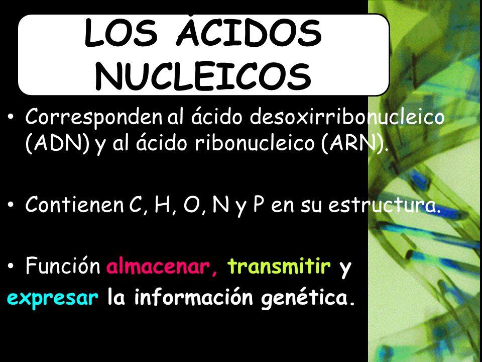 Corresponden al ácido desoxirribonucleico (ADN) y al ácido ribonucleico (ARN).