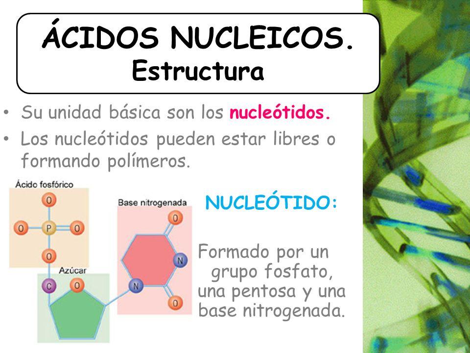 Su unidad básica son los nucleótidos.Los nucleótidos pueden estar libres o formando polímeros.