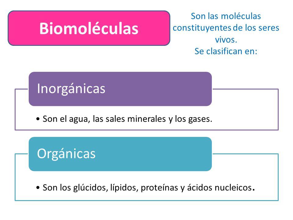 Biomoléculas Son las moléculas constituyentes de los seres vivos.