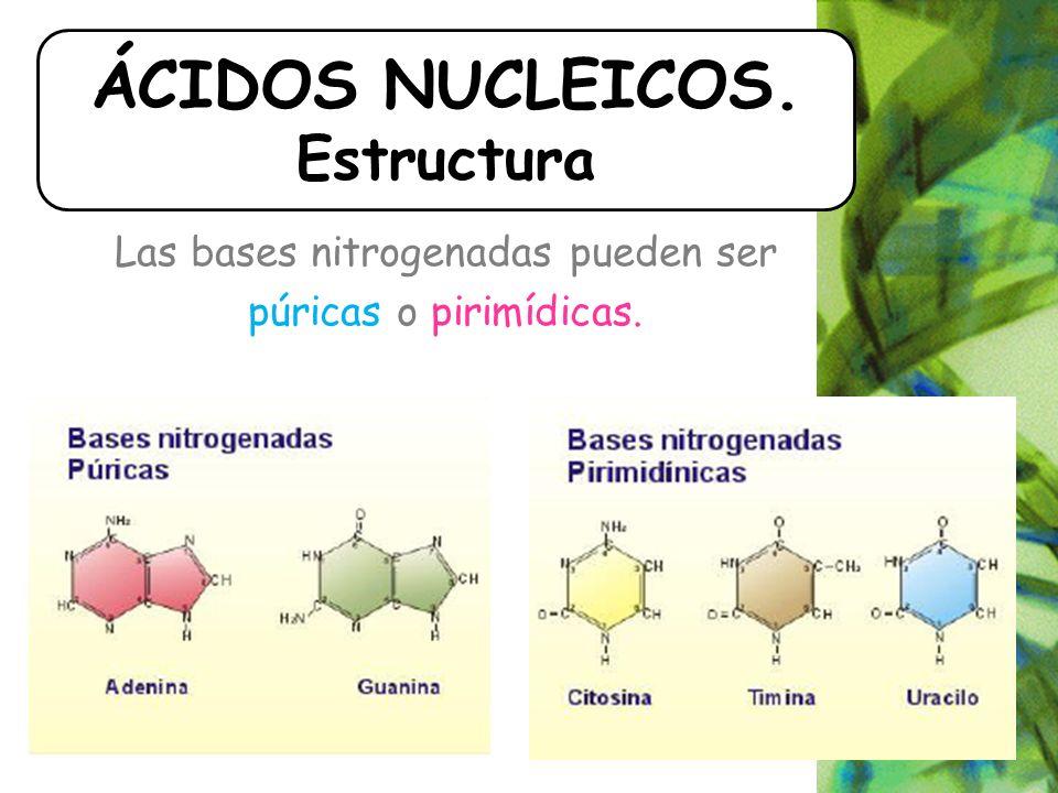 Las bases nitrogenadas pueden ser púricas o pirimídicas. ÁCIDOS NUCLEICOS. Estructura