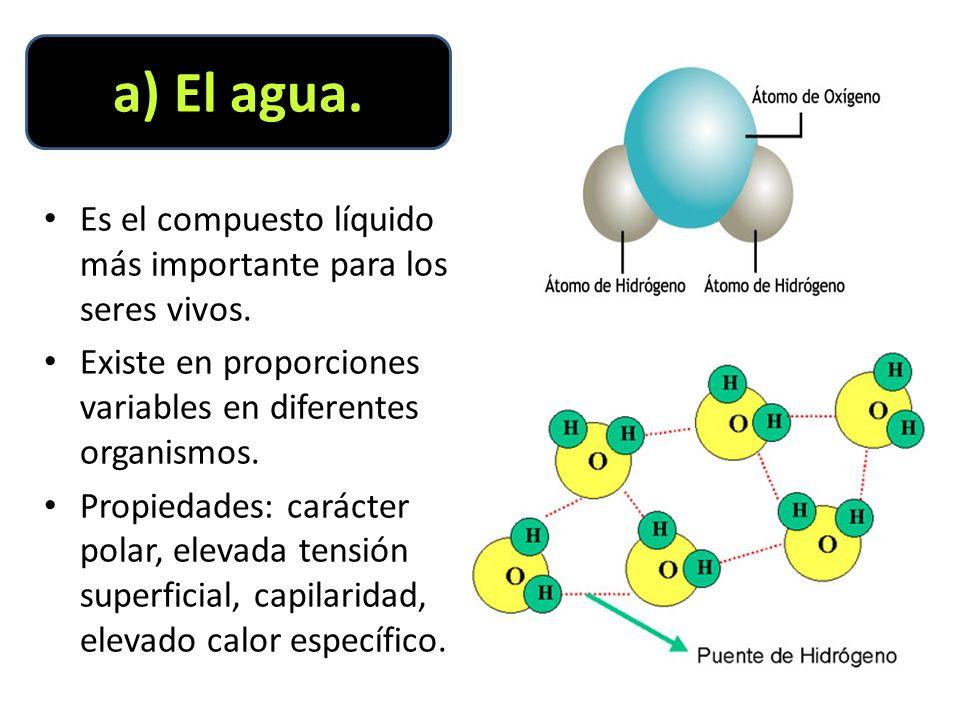 Es el compuesto líquido más importante para los seres vivos.