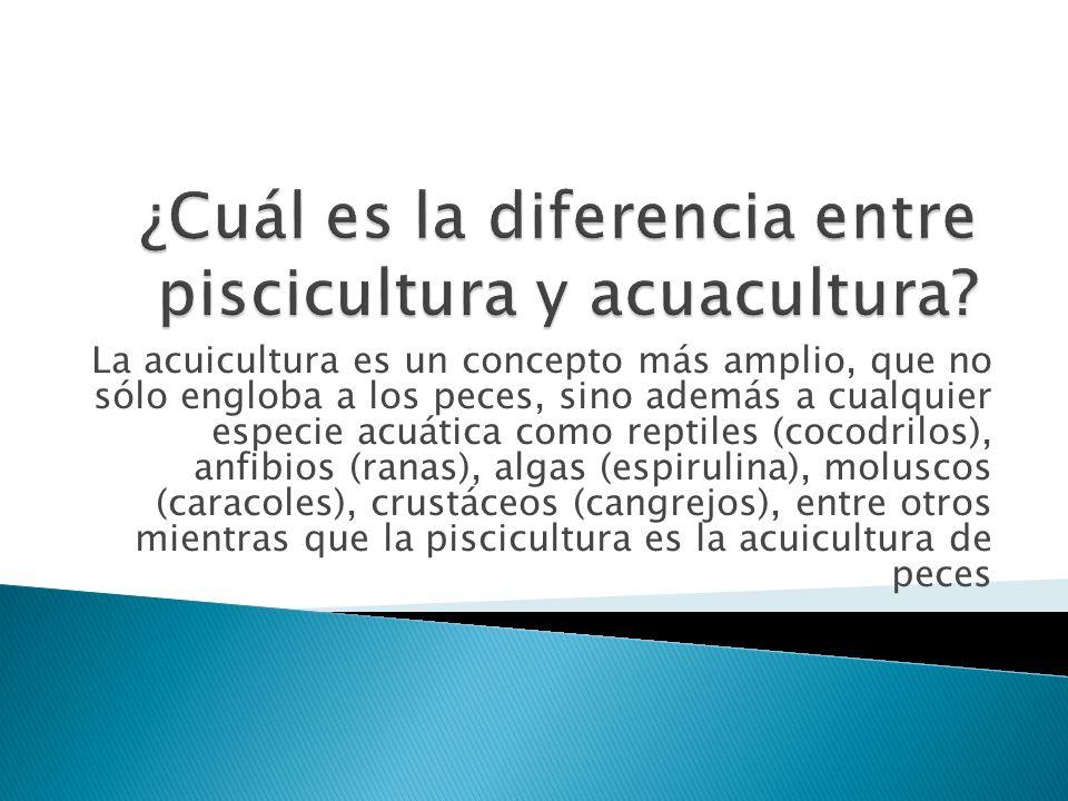 La acuicultura es un concepto más amplio, que no sólo engloba a los peces, sino además a cualquier especie acuática como reptiles (cocodrilos), anfibi