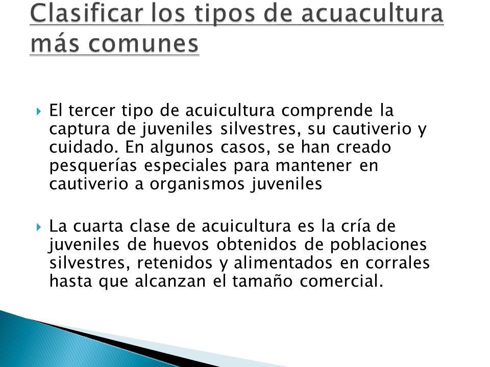 El tercer tipo de acuicultura comprende la captura de juveniles silvestres, su cautiverio y cuidado. En algunos casos, se han creado pesquerías especi