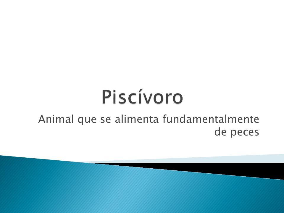 Animal que se alimenta fundamentalmente de peces