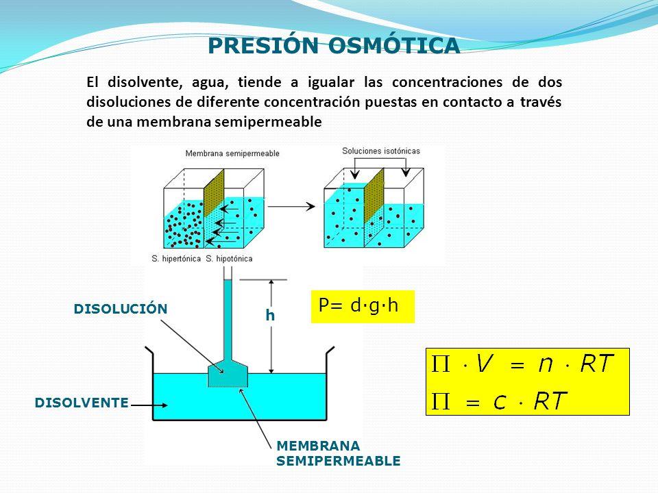 PRESIÓN OSMÓTICA DISOLUCIÓN DISOLVENTE h MEMBRANA SEMIPERMEABLE P= d·g·h El disolvente, agua, tiende a igualar las concentraciones de dos disoluciones