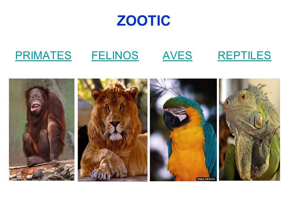 TRASPORTE DE REPTILES Tortugas (30), serpientes(10), iguanas(5) y cocodrilos(5).
