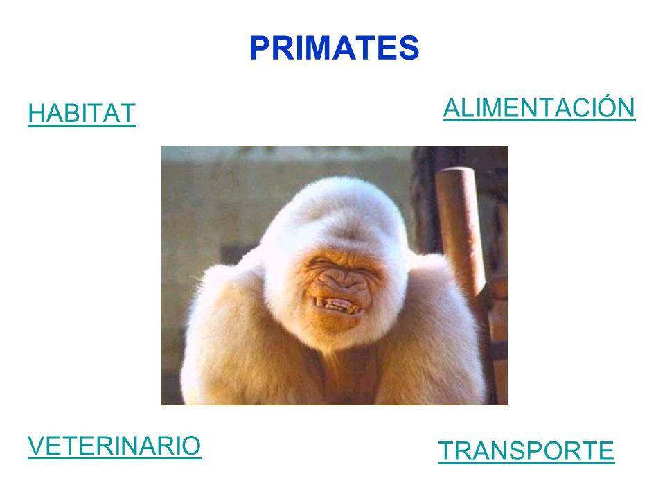 PRIMATES HABITAT ALIMENTACIÓN VETERINARIO TRANSPORTE