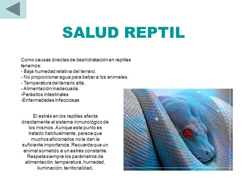 LOS REPTILES SE ALIMENTAN DE… Carnívoros: Pequeños mamíferos, reptiles, aves, peces Insectívoros: Grillos (de varias especies), gusanos de seda, lango