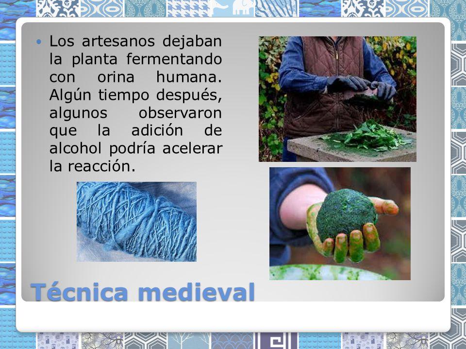 Técnica medieval Los artesanos dejaban la planta fermentando con orina humana.