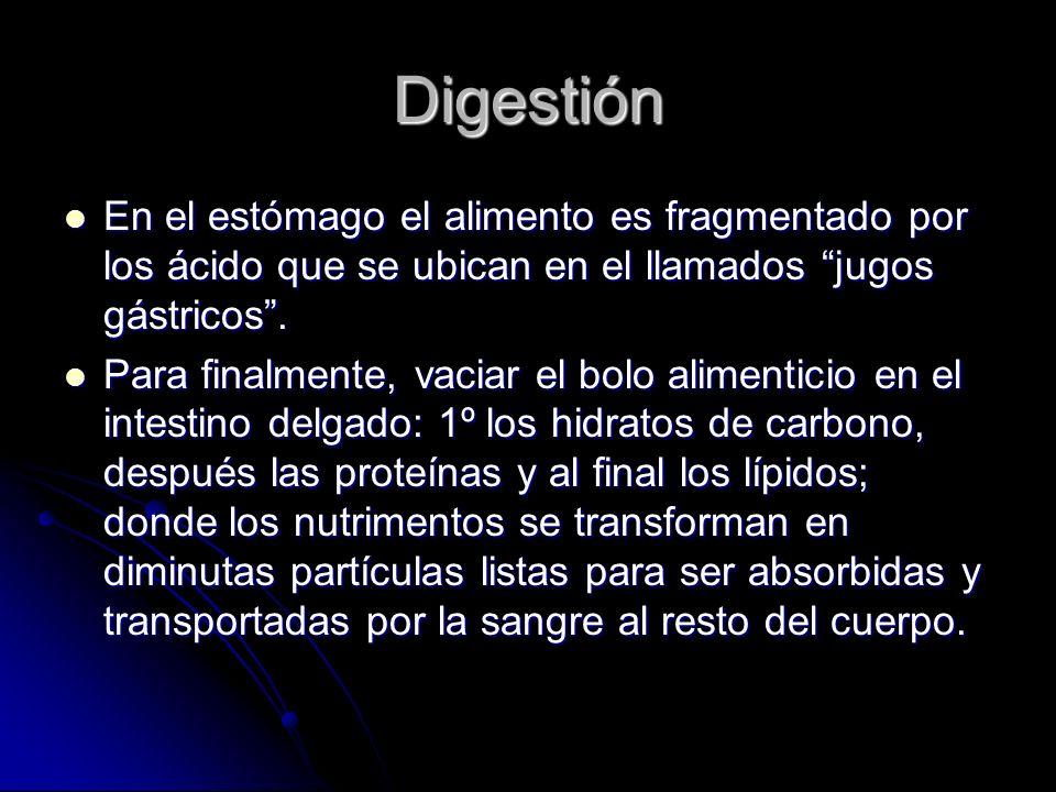 Digestión En el estómago el alimento es fragmentado por los ácido que se ubican en el llamados jugos gástricos.