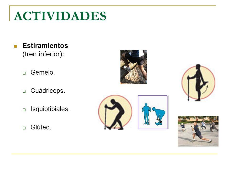 ACTIVIDADES Estiramientos (tren inferior): Gemelo. Cuádriceps. Isquiotibiales. Glúteo.