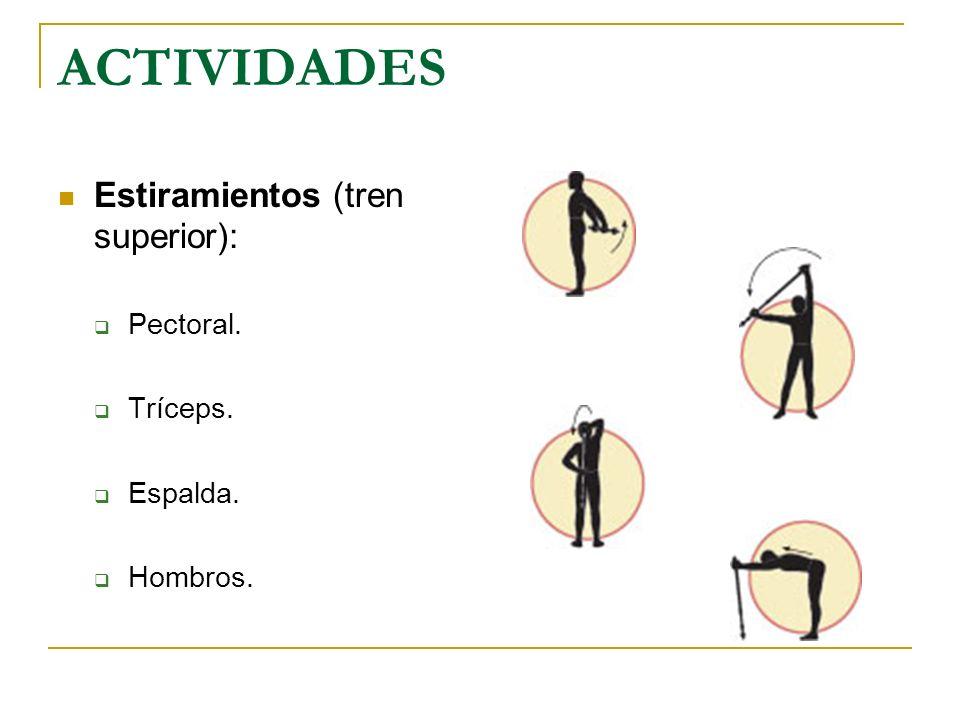ACTIVIDADES Estiramientos (tren superior): Pectoral. Tríceps. Espalda. Hombros.