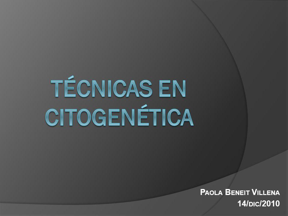 Citogenética Convencional Estudio citogenético convencional de las neoplasias hematológicas En SP y MO Citogenética: Estudio de los cromosomas de las células hematopoyéticas en su fase de máxima concentración (metafase) Cariotipo: Ordenación de los cromosomas en 22 parejas de cromosomas autosómicos y una pareja de cromosomas sexuales
