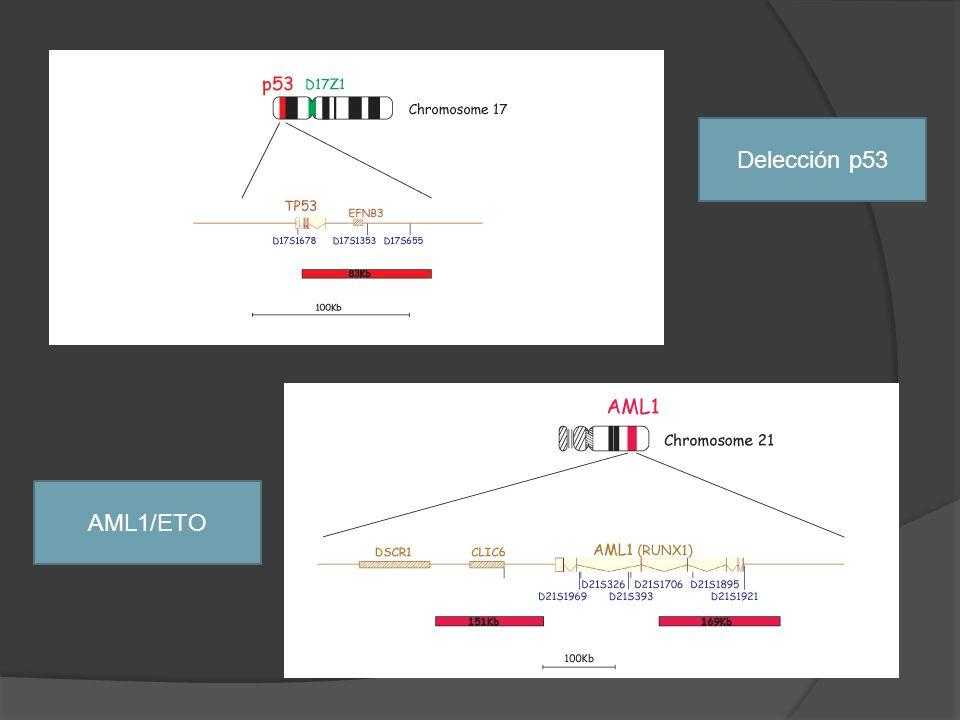 Delección p53 AML1/ETO
