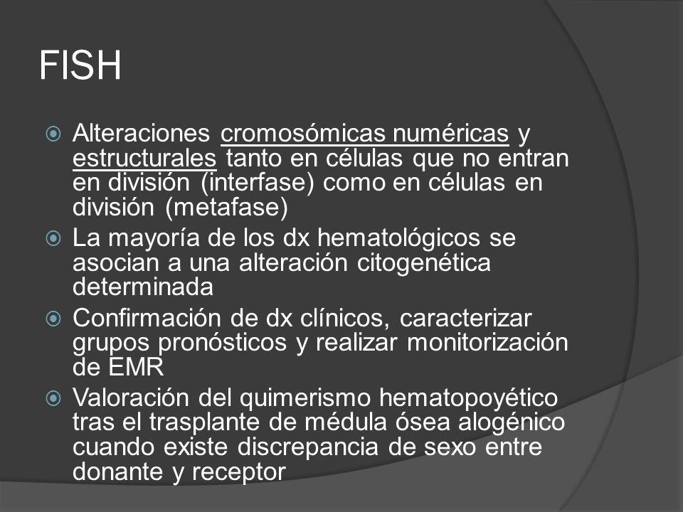 FISH Alteraciones cromosómicas numéricas y estructurales tanto en células que no entran en división (interfase) como en células en división (metafase) La mayoría de los dx hematológicos se asocian a una alteración citogenética determinada Confirmación de dx clínicos, caracterizar grupos pronósticos y realizar monitorización de EMR Valoración del quimerismo hematopoyético tras el trasplante de médula ósea alogénico cuando existe discrepancia de sexo entre donante y receptor