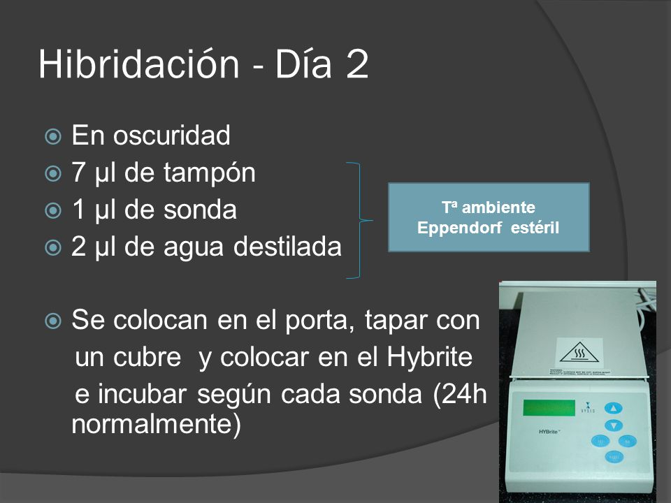 Hibridación - Día 2 En oscuridad 7 µl de tampón 1 µl de sonda 2 µl de agua destilada Se colocan en el porta, tapar con un cubre y colocar en el Hybrite e incubar según cada sonda (24h normalmente) Tª ambiente Eppendorf estéril