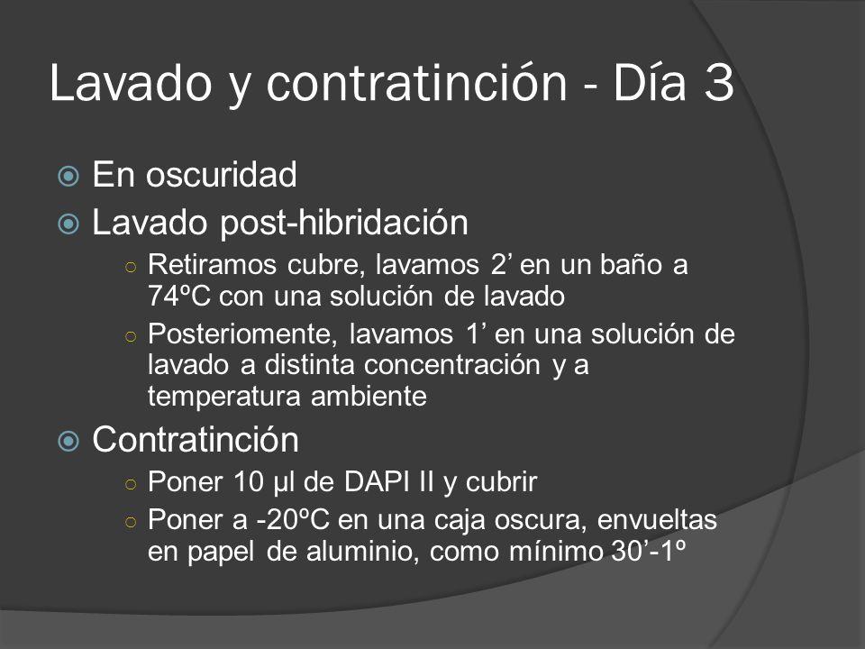 Lavado y contratinción - Día 3 En oscuridad Lavado post-hibridación Retiramos cubre, lavamos 2 en un baño a 74ºC con una solución de lavado Posteriomente, lavamos 1 en una solución de lavado a distinta concentración y a temperatura ambiente Contratinción Poner 10 µl de DAPI II y cubrir Poner a -20ºC en una caja oscura, envueltas en papel de aluminio, como mínimo 30-1º