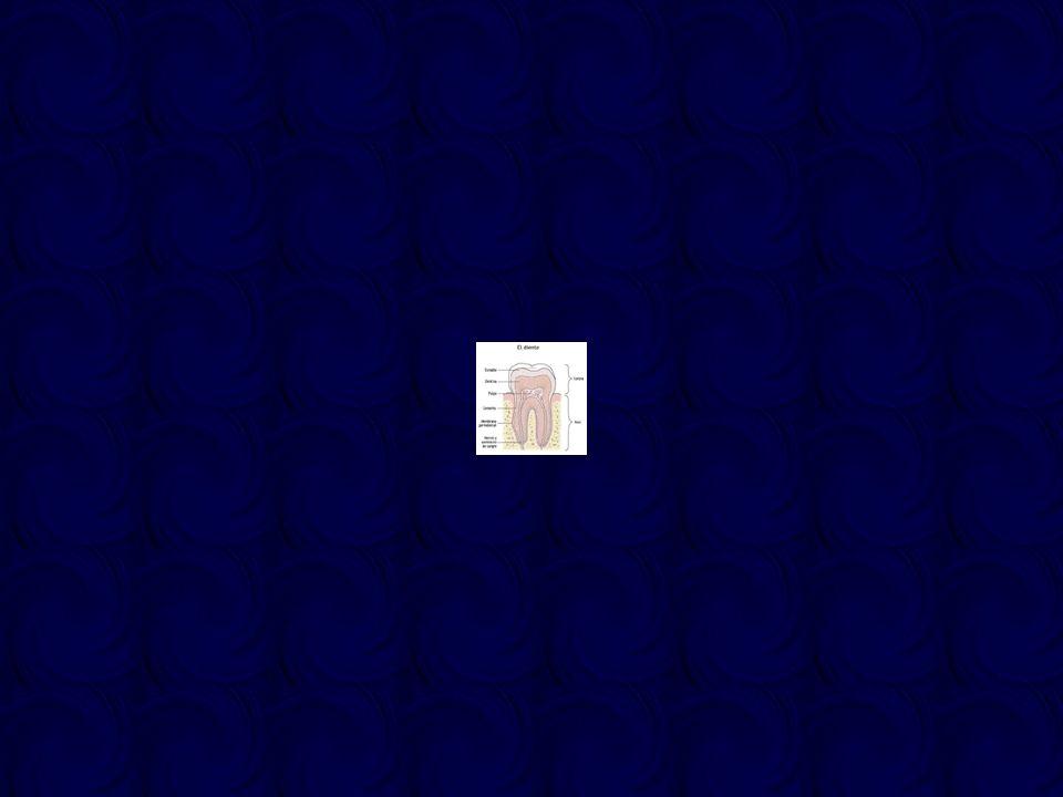 Blanqueamiento dental Desde hace más de 100 años el peróxido de hidrógeno y el ácido clorhídrico (juntos o separados) se han venido usando para tratar las tinciones internas y externas de los dientes, tanto en dientes vitales como endodonciados En 1877, Chapple publica sus ensayos con ácido oxálico Las técnicas de blanqueamiento mediante peróxido de hidrógeno activado por calor (dejaba los dientes de color blanco tiza) cayeron en desuso durante mucho tiempo hasta reactivarse en la década de los 70, cuando prevalecieron las coloraciones por tetraciclinas