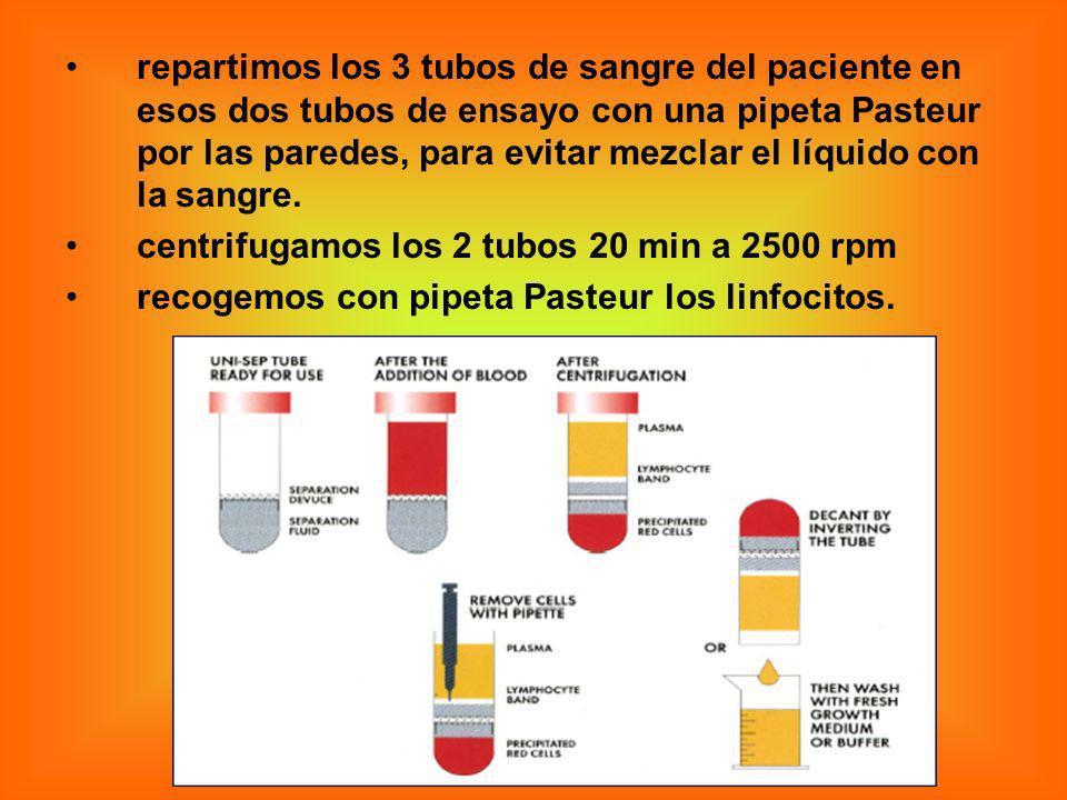 repartimos los 3 tubos de sangre del paciente en esos dos tubos de ensayo con una pipeta Pasteur por las paredes, para evitar mezclar el líquido con l