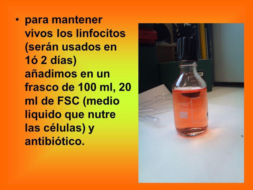 para mantener vivos los linfocitos (serán usados en 1ó 2 días) añadimos en un frasco de 100 ml, 20 ml de FSC (medio liquido que nutre las células) y a