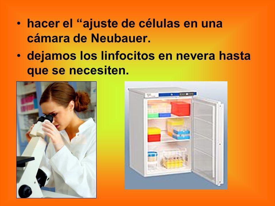 hacer el ajuste de células en una cámara de Neubauer. dejamos los linfocitos en nevera hasta que se necesiten.