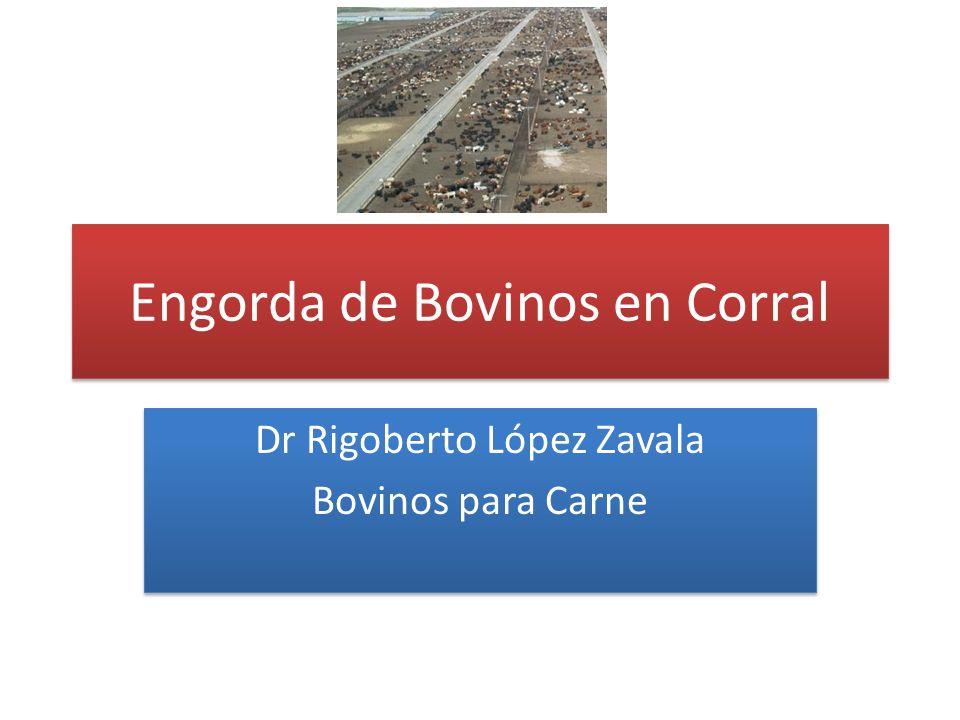 Engorda de Bovinos en Corral Dr Rigoberto López Zavala Bovinos para Carne Dr Rigoberto López Zavala Bovinos para Carne