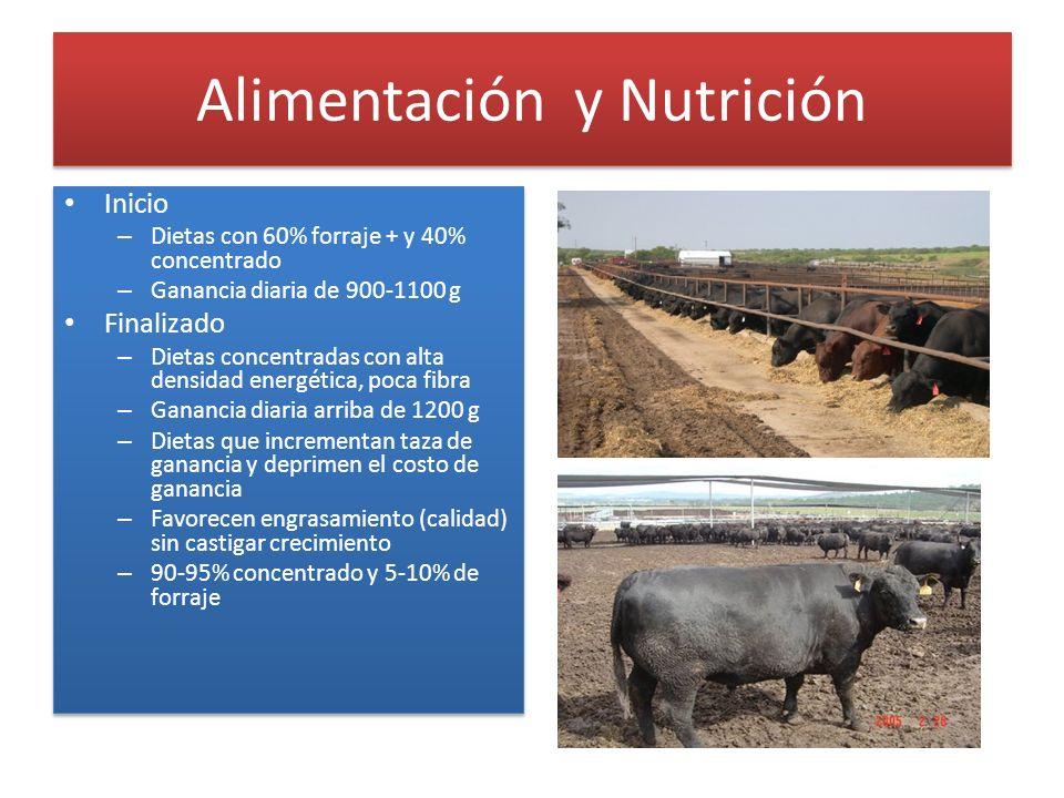 Alimentación y Nutrición Inicio – Dietas con 60% forraje + y 40% concentrado – Ganancia diaria de 900-1100 g Finalizado – Dietas concentradas con alta