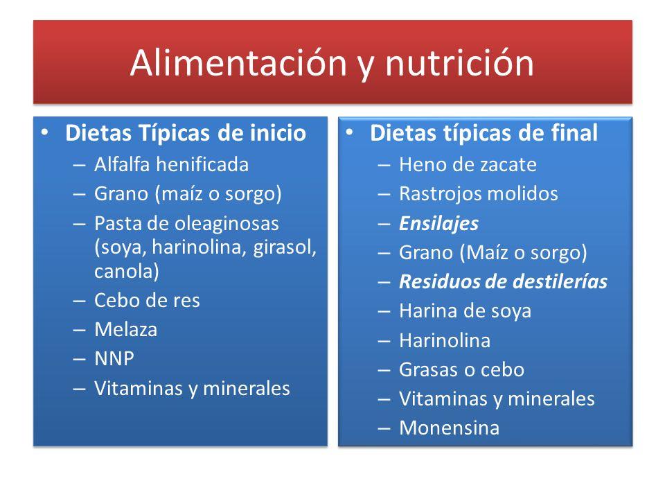 Alimentación y nutrición Dietas Típicas de inicio – Alfalfa henificada – Grano (maíz o sorgo) – Pasta de oleaginosas (soya, harinolina, girasol, canol