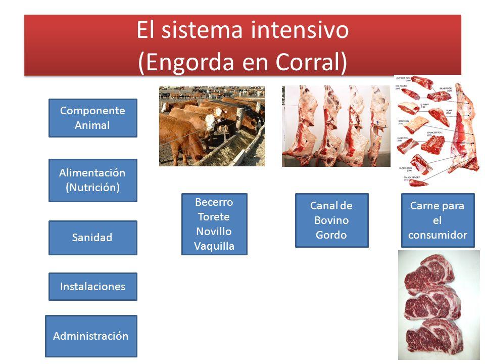 El sistema intensivo (Engorda en Corral) Becerro Torete Novillo Vaquilla Canal de Bovino Gordo Alimentación (Nutrición) Sanidad Administración Compone
