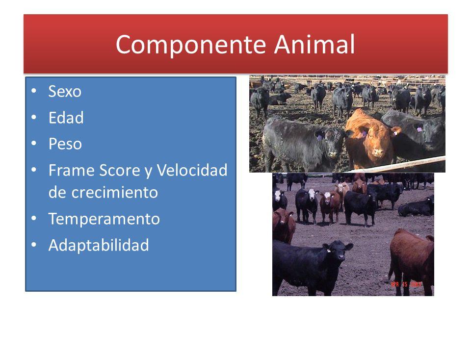 Componente Animal Sexo Edad Peso Frame Score y Velocidad de crecimiento Temperamento Adaptabilidad