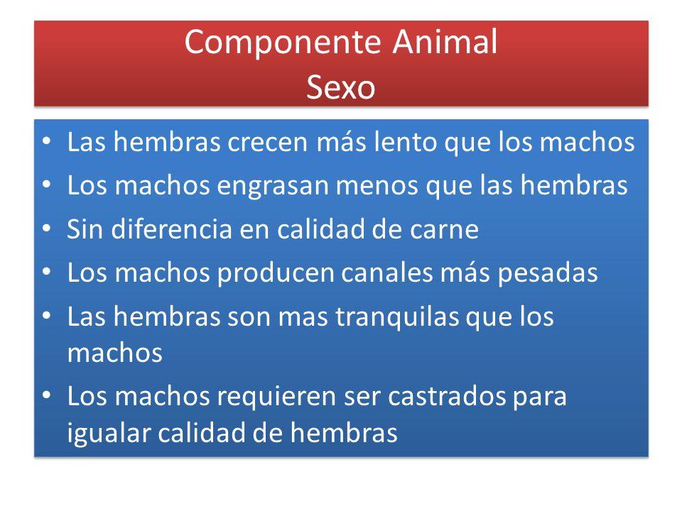 Componente Animal Sexo Las hembras crecen más lento que los machos Los machos engrasan menos que las hembras Sin diferencia en calidad de carne Los ma